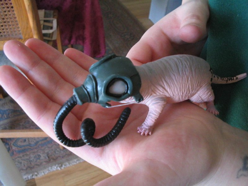 naked_molerat_gas_mask_by_sneakyfetusprod